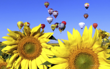 HOT AIR BALLOONS FLY OVER SUNFLOWERS DURING WORLD AIR GAMES IN SEVILLE